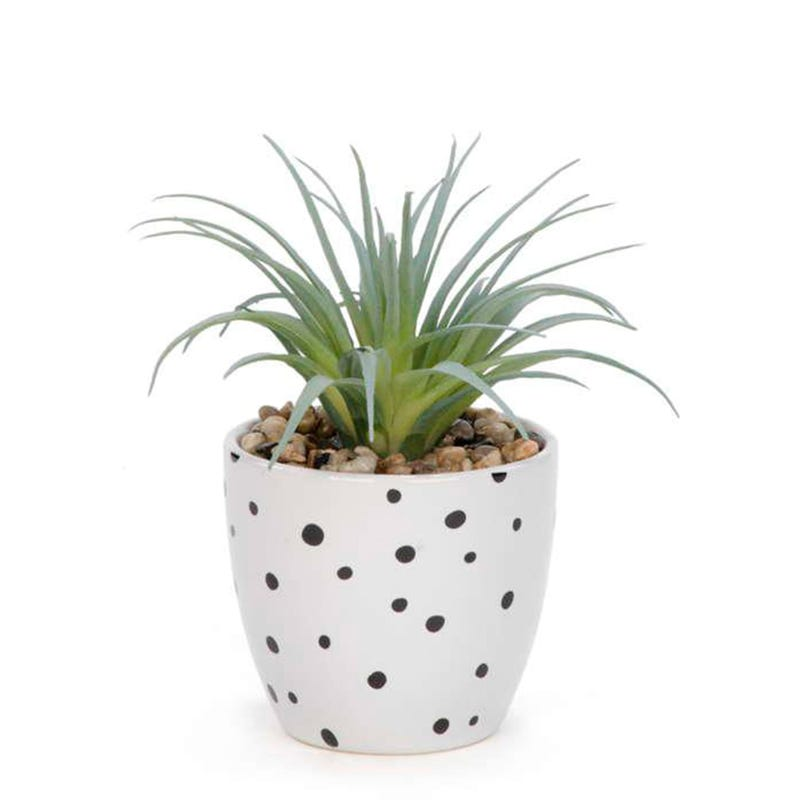 Potted Cactus - White