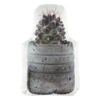 Coussin Cactus - Pot Rond