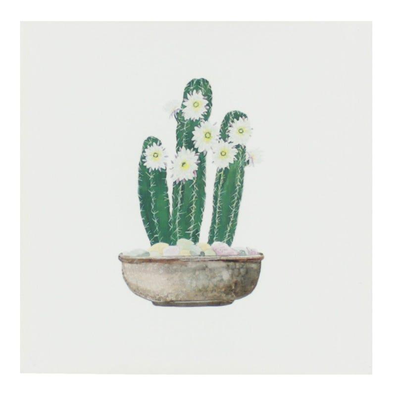 Cadre Cactus Cierge Fleurs Blanc