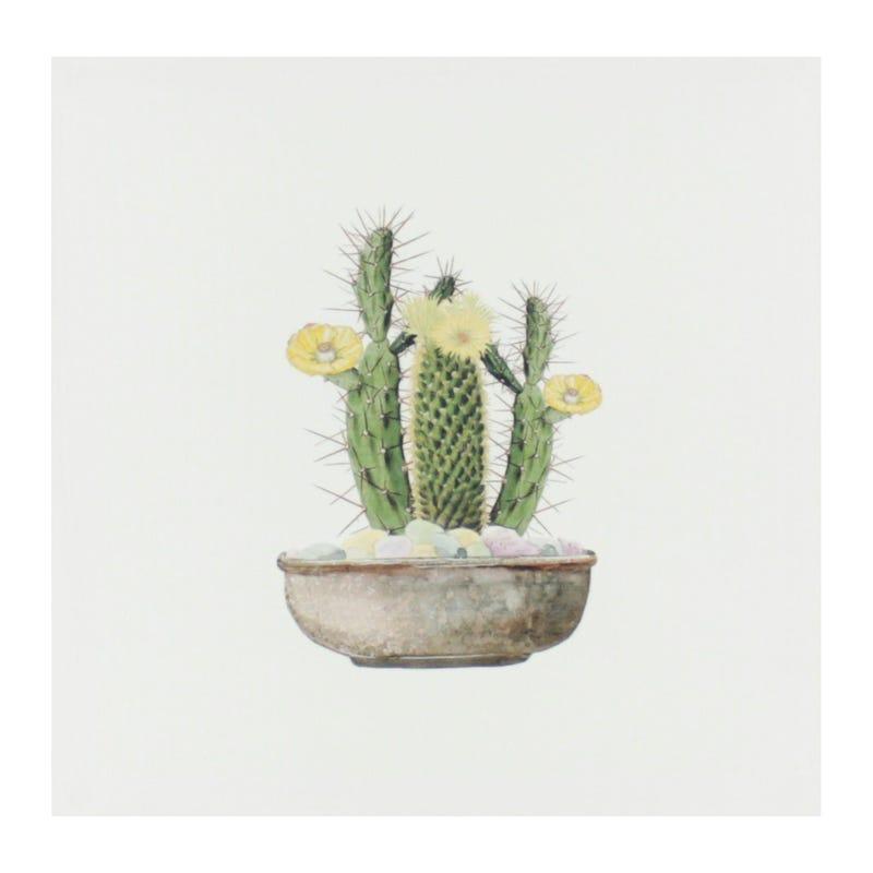 Cadre Cactus Cierge Fleurs Jau