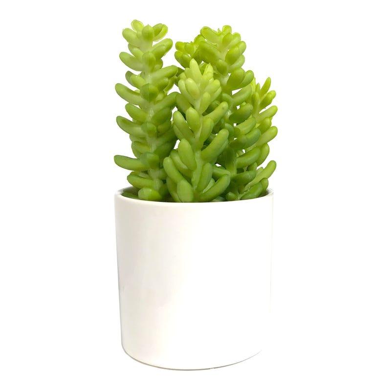 Cactus Succulente Pot Blanc
