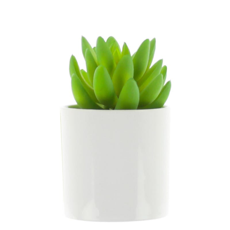 Cactus Pot Blanc
