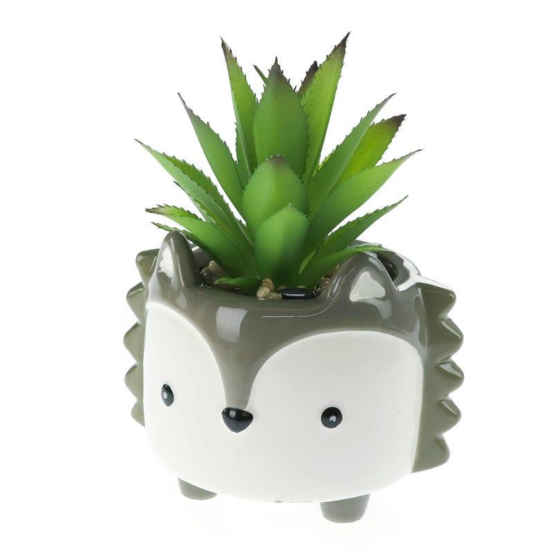 Pot Fox Cactus